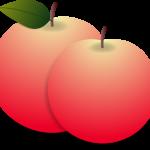 イラスト「りんご」