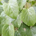 雨でも外に出かけよう! 雨の日の園外保育まとめ
